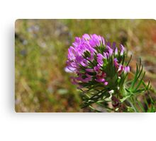 Paintbrush Flower-Hite Cove trail, Merced River, California Canvas Print