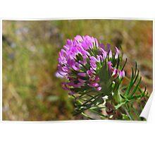 Paintbrush Flower-Hite Cove trail, Merced River, California Poster
