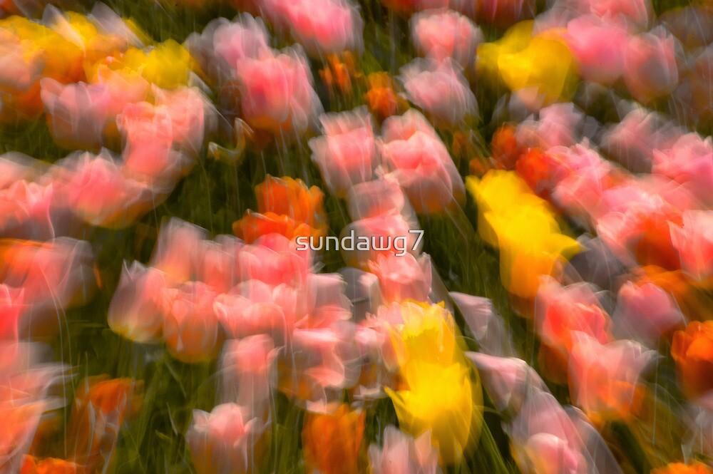 Tulip Cabaret by sundawg7