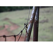 Wire Fence - Narooma Photographic Print