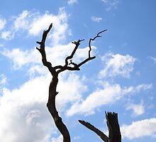 Blue tree by snpsterdotinfo