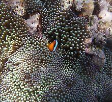 """Hiding """"Nemo"""" by Razuya"""