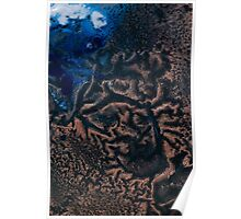 Polar Reticulated Copper Poster