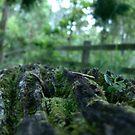 Moss Log - Border Ranges QLD by Rowan Nancarrow