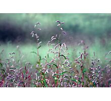 Field of Pink and Green Photographic Print