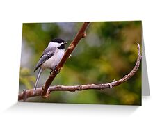 Black Capped Chickadee - Ottawa, Ontario Greeting Card