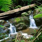 Olinda Falls - Dandenong Ranges by David Firth