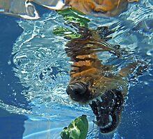Aquatic Attack by Cody  VanDyke