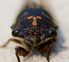 Bug Eyed by Lori2704