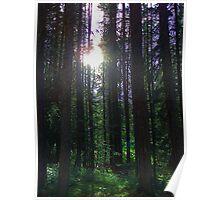 Glinting Sun - Banff National Park Poster