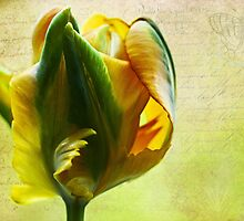 Tulip time by IngeHG