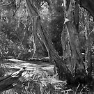 BW Swamp by Darrell Kelsey