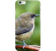 My Mate Is More Handome  - Female Bellbird - NZ iPhone Case/Skin