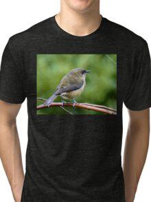 My Mate Is More Handome  - Female Bellbird - NZ Tri-blend T-Shirt