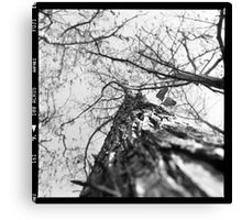 Up the Lox Tree Canvas Print