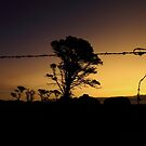 Sunset Fence line  by phillip wise