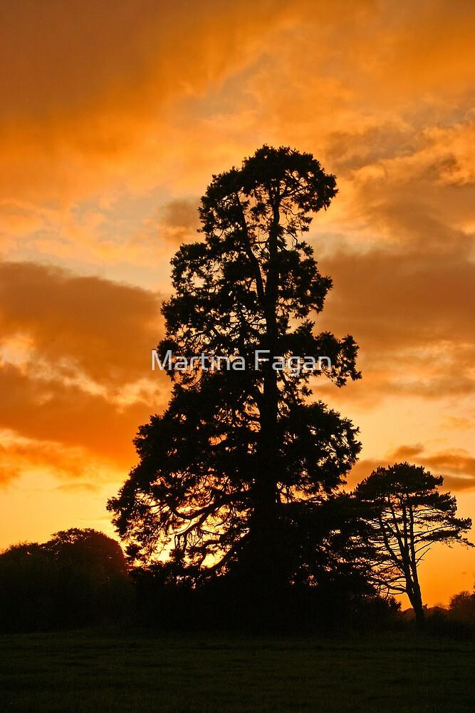 Tree at sunset by Martina Fagan