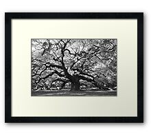 angel oak tree Framed Print