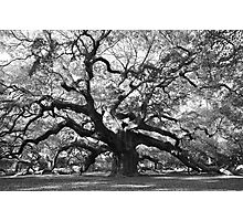 angel oak tree Photographic Print
