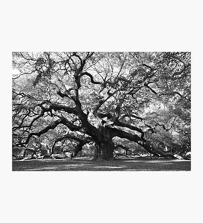 angel oak tree Photographic Print