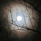 Mysterous Moon by Linda Miller Gesualdo