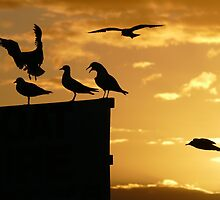 6 birds by PhotosByG
