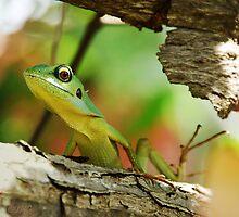 Lizard with pastel bokeh by IngeHG