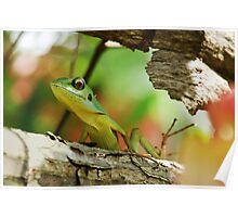 Lizard with pastel bokeh Poster