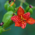 Flower by Richard Skoropat