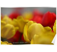 Tulips :) Poster