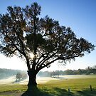 Winter Sun at the Turkey Oak by John Gaffen