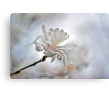 White Glory  Canvas Print