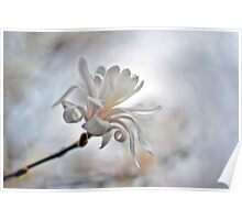 White Glory  Poster