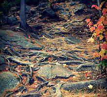 Beaten Path by Debbie-Anne Parent