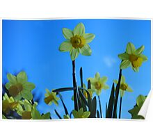 Spring Has Arrived Poster