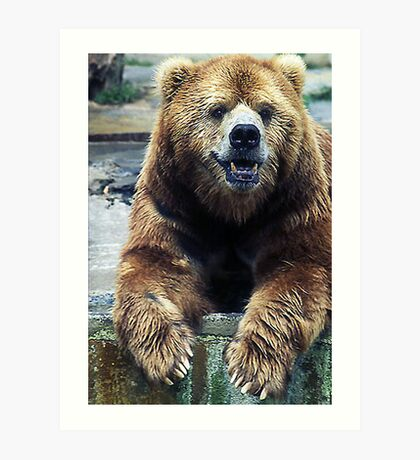 Big Kodiak  Art Print