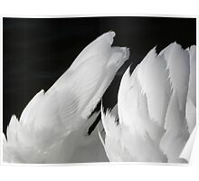 angel wings Poster