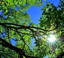 Sunbeam-Mariposa, Ca by Alan Brazzel