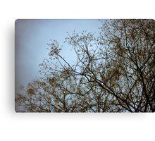 tree prints #2 Canvas Print