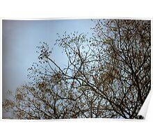 tree prints #2 Poster