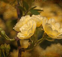 Old World Roses by Bonnie T.  Barry