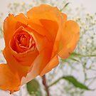 Orange Beauty by Ree  Reid