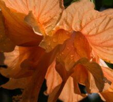 Glowing Orange Hibiscus Sticker