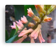 Peach Hyacinth Canvas Print