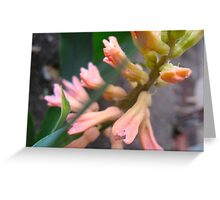 Peach Hyacinth Greeting Card