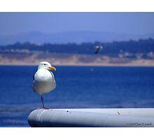 Seagull on a Rail Photographic Print