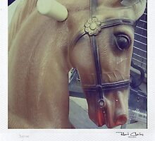 Horse by RobertCharles