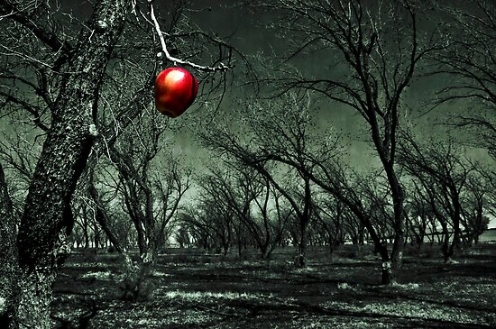 Thee Apple by Neil Photograph