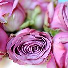faded roses by DarylE