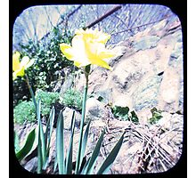 Daffy TTV Photographic Print